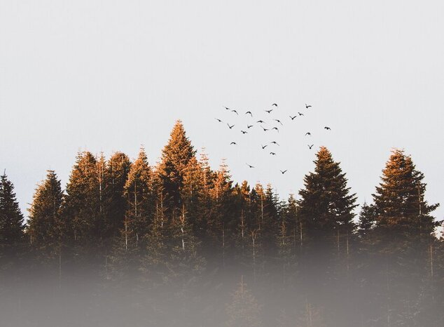 Bos met vogels in de lucht