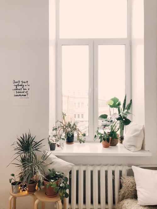 Planten op vensterbank in raam